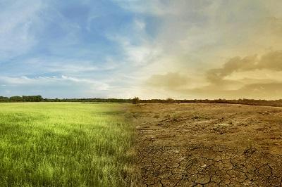Pomoc suszowa - kolejna pula środków na kontach rolników